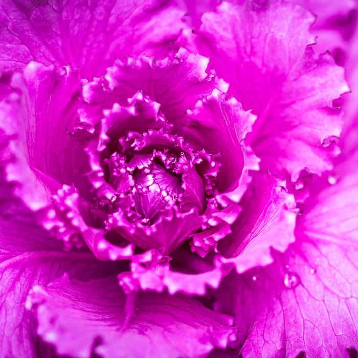Spires Nursery   winter colour